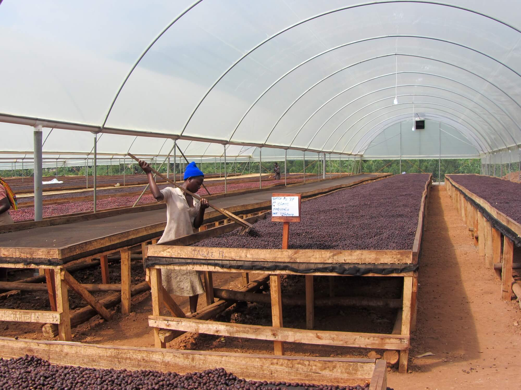 Uganda-Kisinga-Weihnachtskaffee